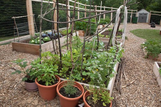 One resident's handmade trellis for beans.