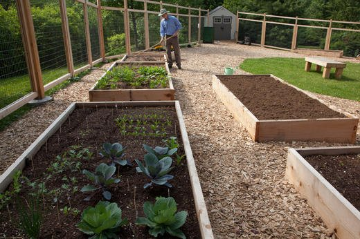 Raised beds are crafted from all-natural cedar and measure 4 feet x 10 feet.